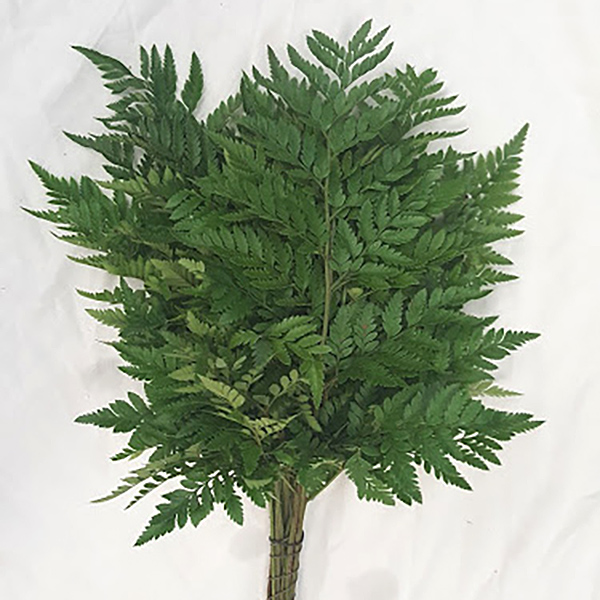 Leather Leaf Grower Bunches
