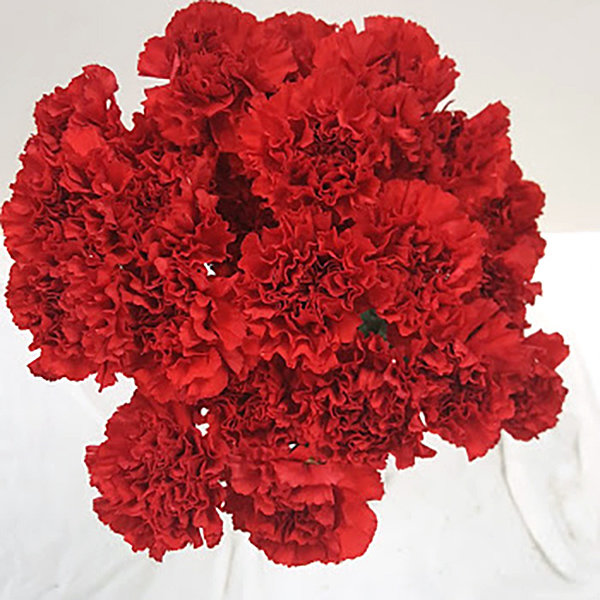 Red Carnation Grower Bunches