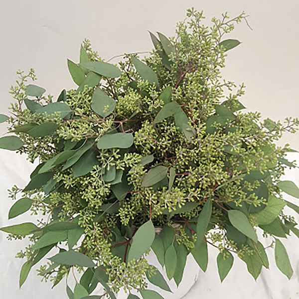 Seeded Eucalyptus Grower Bunches