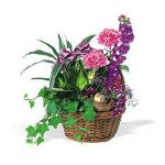 WW-123 Basket Garden