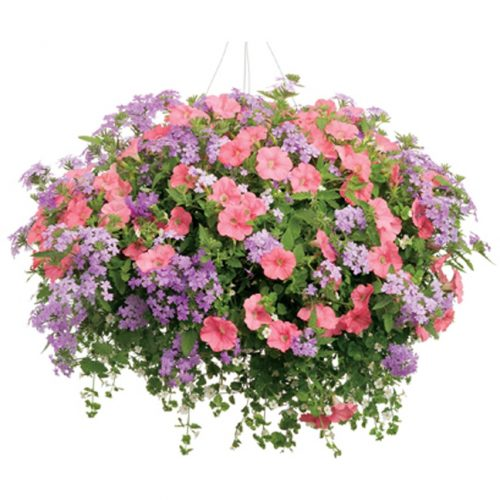 WW-219 Multi Color Hanging Basket