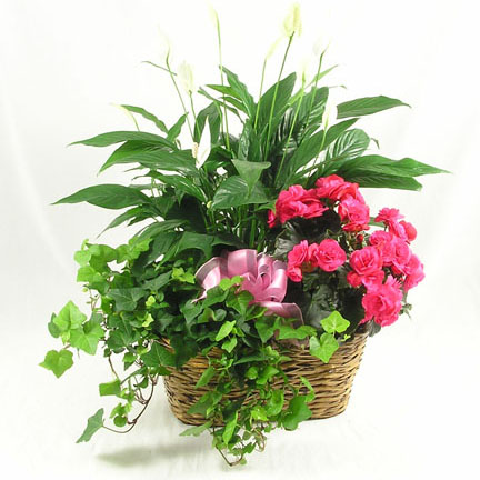 WW-283 Triple Plant Basket