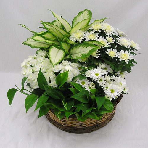 WW-332 All White Plant Basket