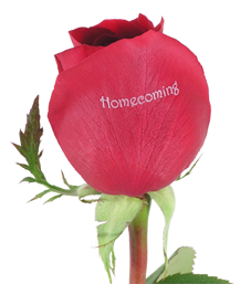 red_homecoming_rose